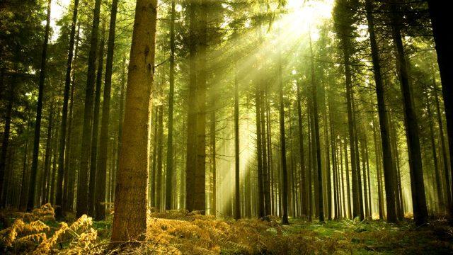 Леса открыли для посещения еще в двух районах Республики