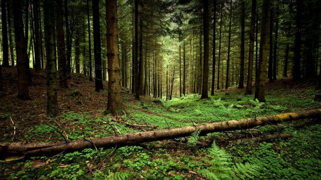 Житель Речицкого района заблудился в лесу