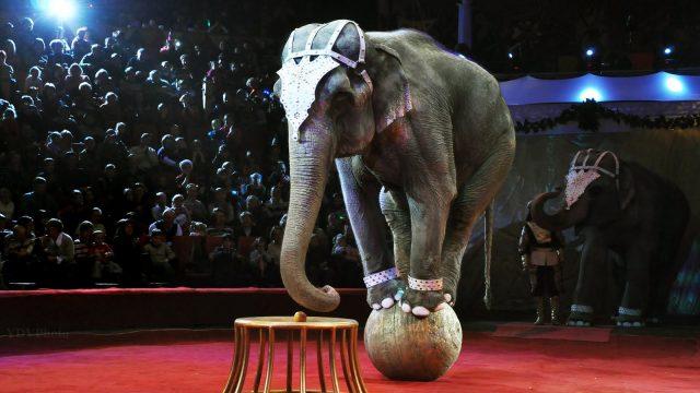 Инцидент со слоном