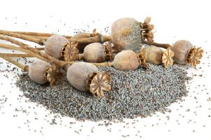 В гараже минчанки нашли более тонны семян мака