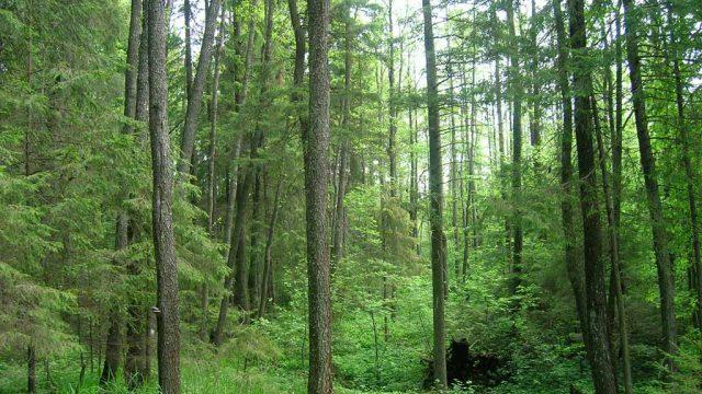 В отдельных районах снят запрет на посещение леса