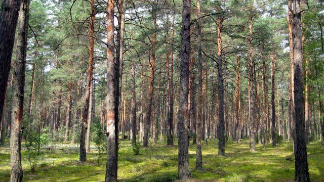 В Гродненской области полностью снят запрет на посещение леса