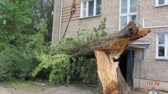 Сильный ветер накануне обесточил 70 населённых пунктов в Минской области