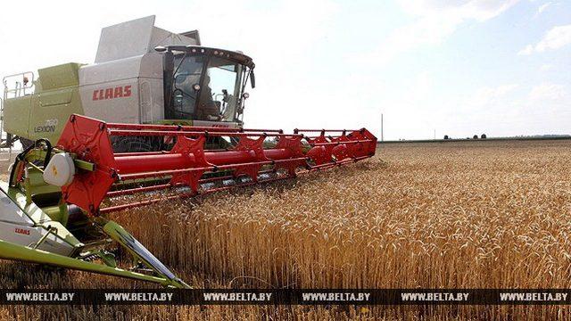 В Беларуси собрали первый миллион тонн зерна
