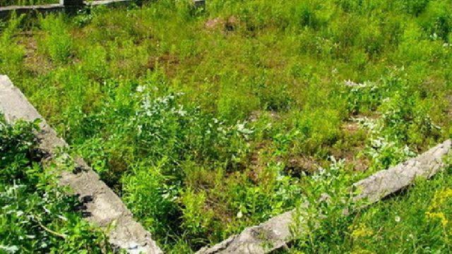 В Минской области изъяли 260 неэффективно используемых земельных участков