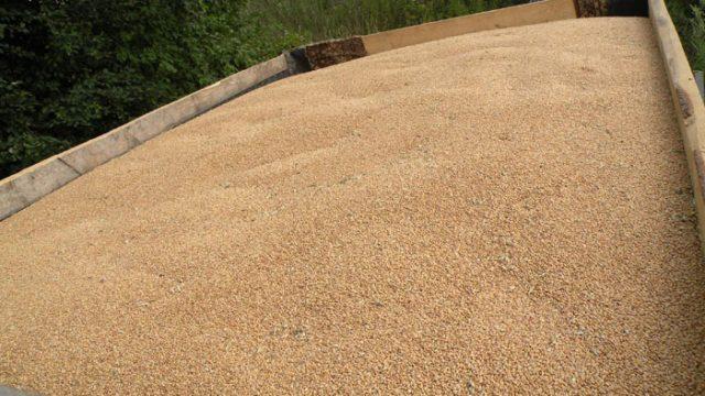 Кража пшеницы
