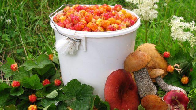 Власти приостановили пропуск украинцев для сбора ягод и грибов на территории Беларуси
