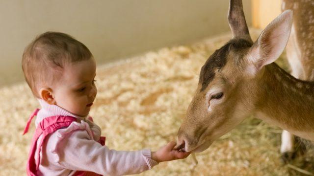 В Минске появился контактный зоопарк