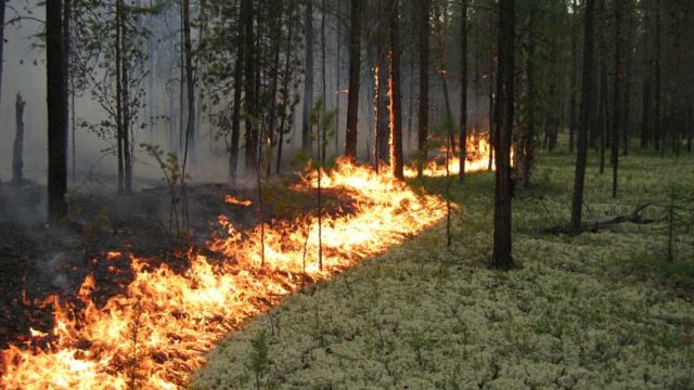 На участке трассы Минск-Могилёв временно приостановлено движение из-за лесного пожара