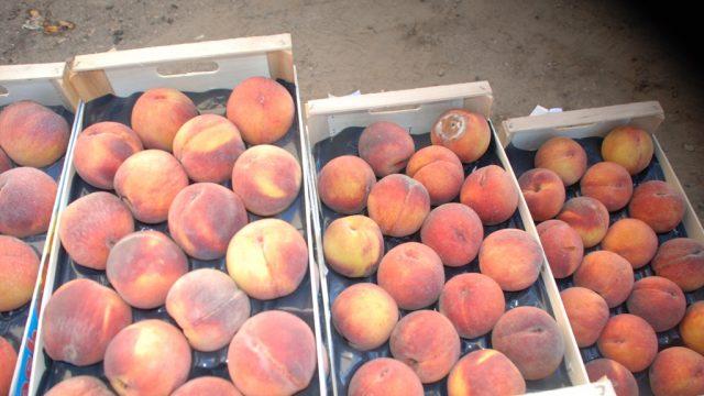 Витебская таможня пресекла незаконный ввоз 17 тонн персиков и нектаринов
