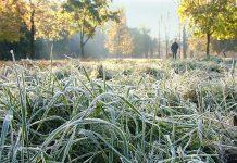 В ночь на 1 октября в Беларуси ожидаются заморозки до -4