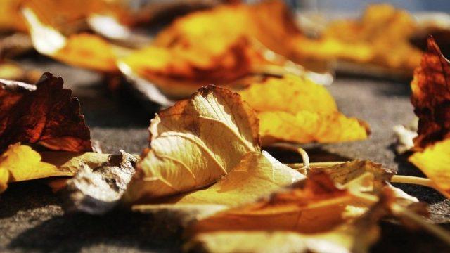 15 ноября в Беларуси ожидается прохладная погода
