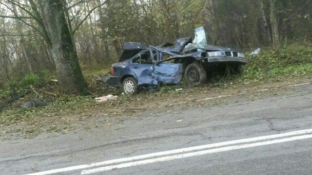 В Логойском районе в ДТП из-за енота погиб пассажир