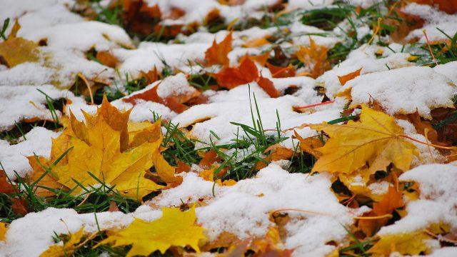 В Витебске выпал первый снег