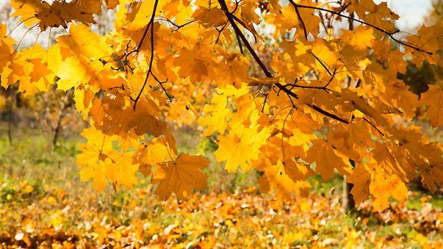 В Беларуси с 14 октября станет значительно теплее, но с осадками