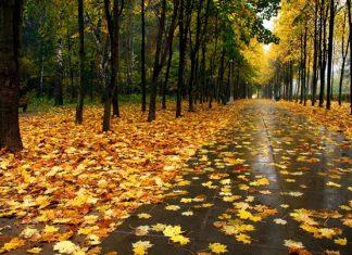 На выходных, 17-18 октября, в Беларуси ожидаются дожди