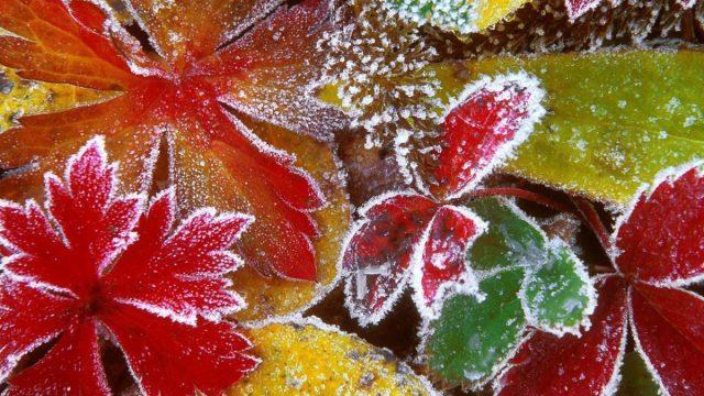 В выходные, 10-11 октября, ожидается холодная погода и заморозки