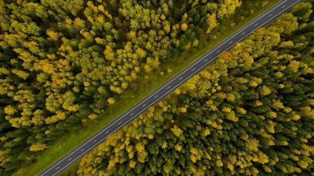 Дорога и лес