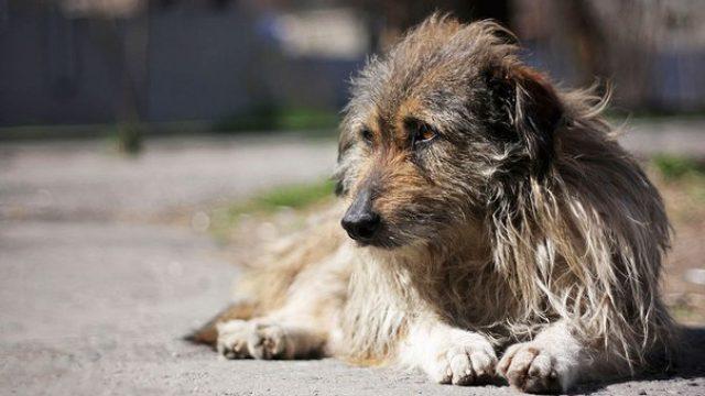 Пьяный житель Гродно зарезал бездомную собаку