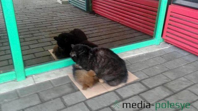 кошка греет щенка