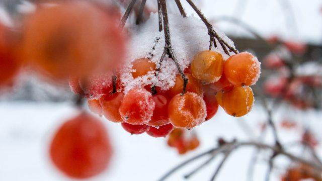 Теплая зима