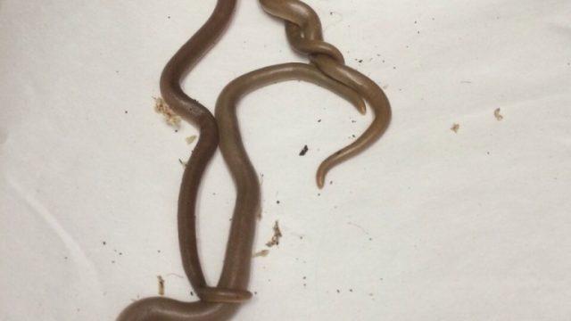 змеи в посылке