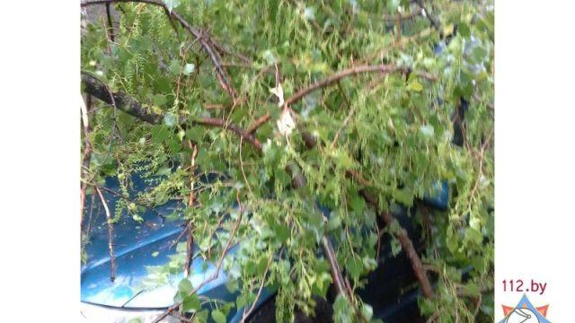 Упавшие деревья