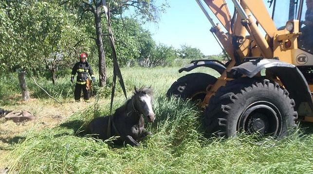 спасали лошадь