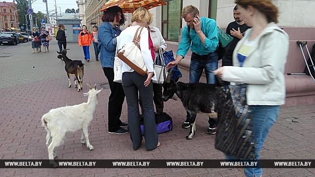 козы у ж/д вокзала