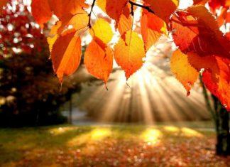 жаркая осень