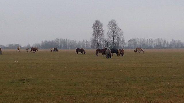 Белорусские таможенники помогли вернуть табун лошадей вПольшу