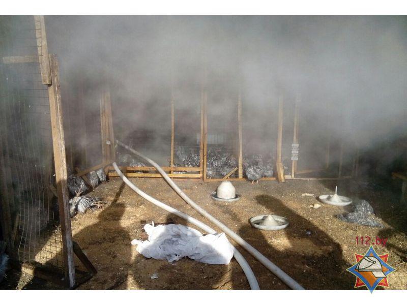 Вмощном пожаре под Дзержинском живьем сгорели 700 кур