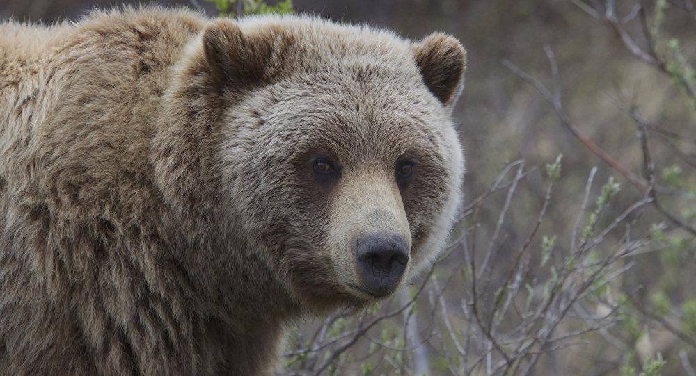 Видеофакт: На трассе около Минска заметили бегущего медведя