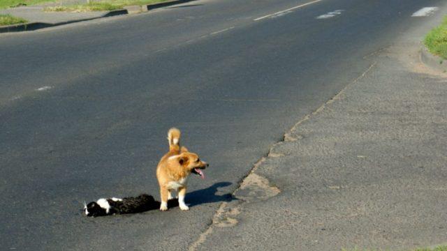 собака защищает кота