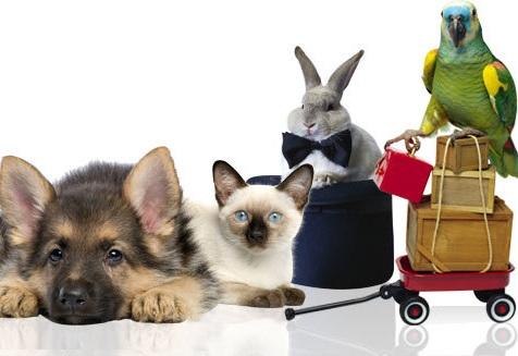 Товары для любимых животных