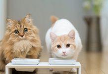 Как правильно кормить стерилизованных кошек