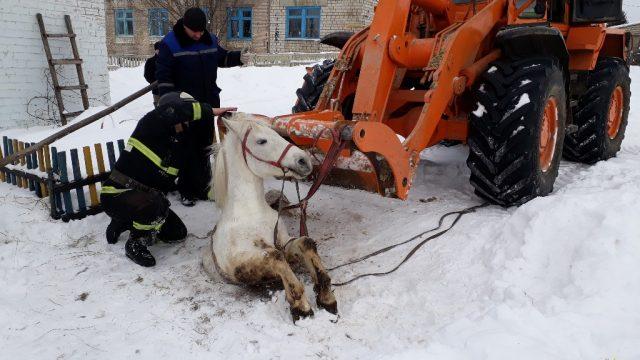 лошадь упала