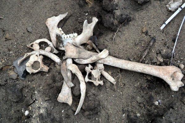 костные останки
