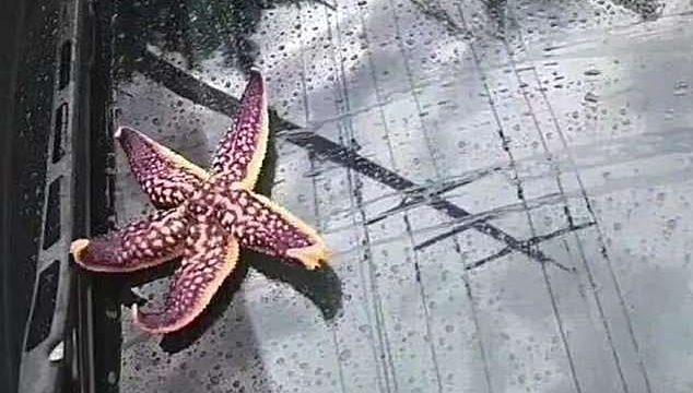 дождь из морских обитателей