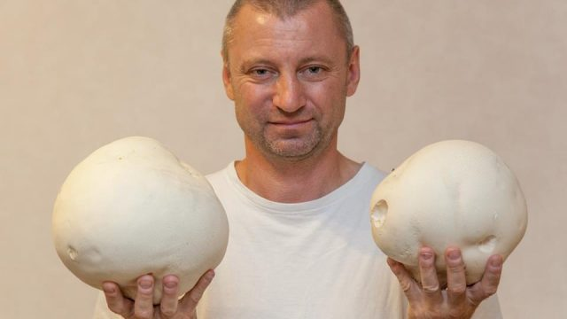 грибы-дождевики