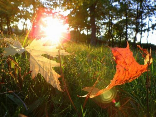 жара осенью