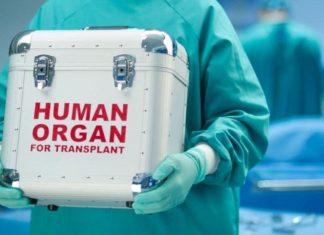 трансплантация